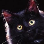 Surprised cat HD wallpaper