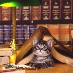 Reading cat wallpaper