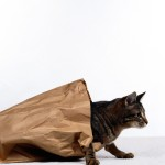 Cat in a bag wallpaper