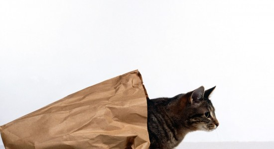 High resolution cat out of bag wallpaper