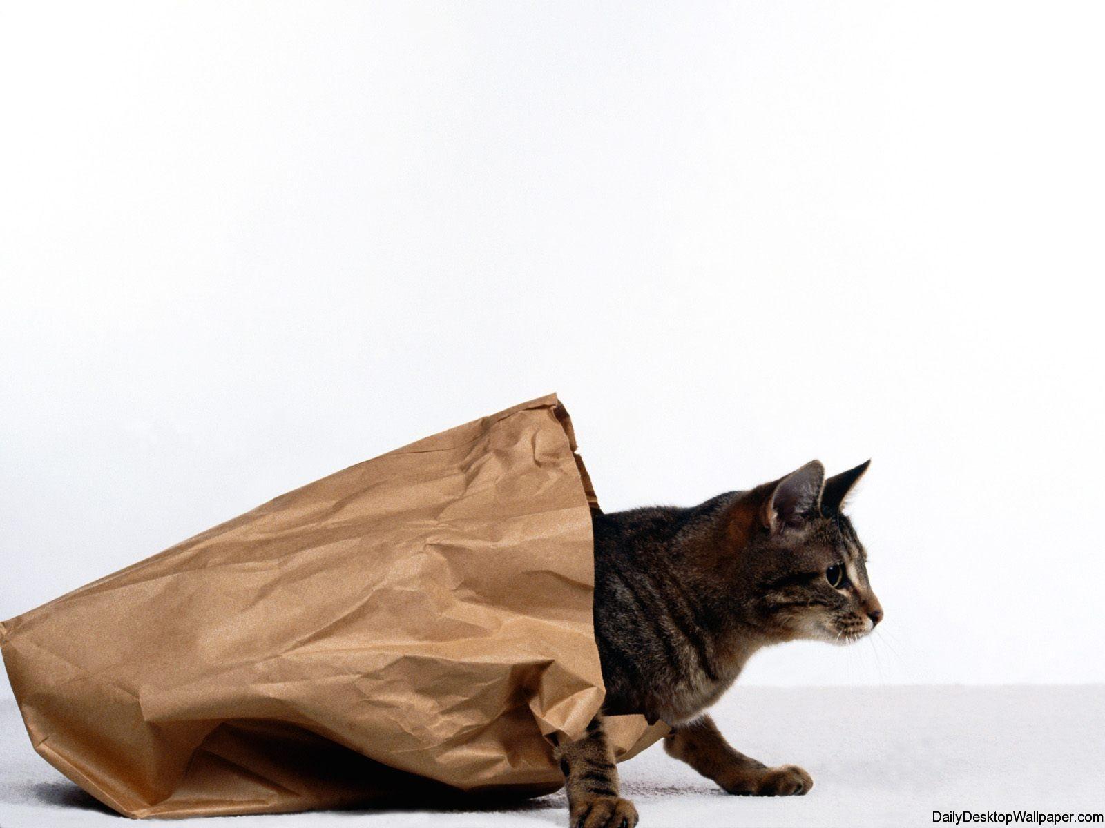 Cat in a bag wallpaper