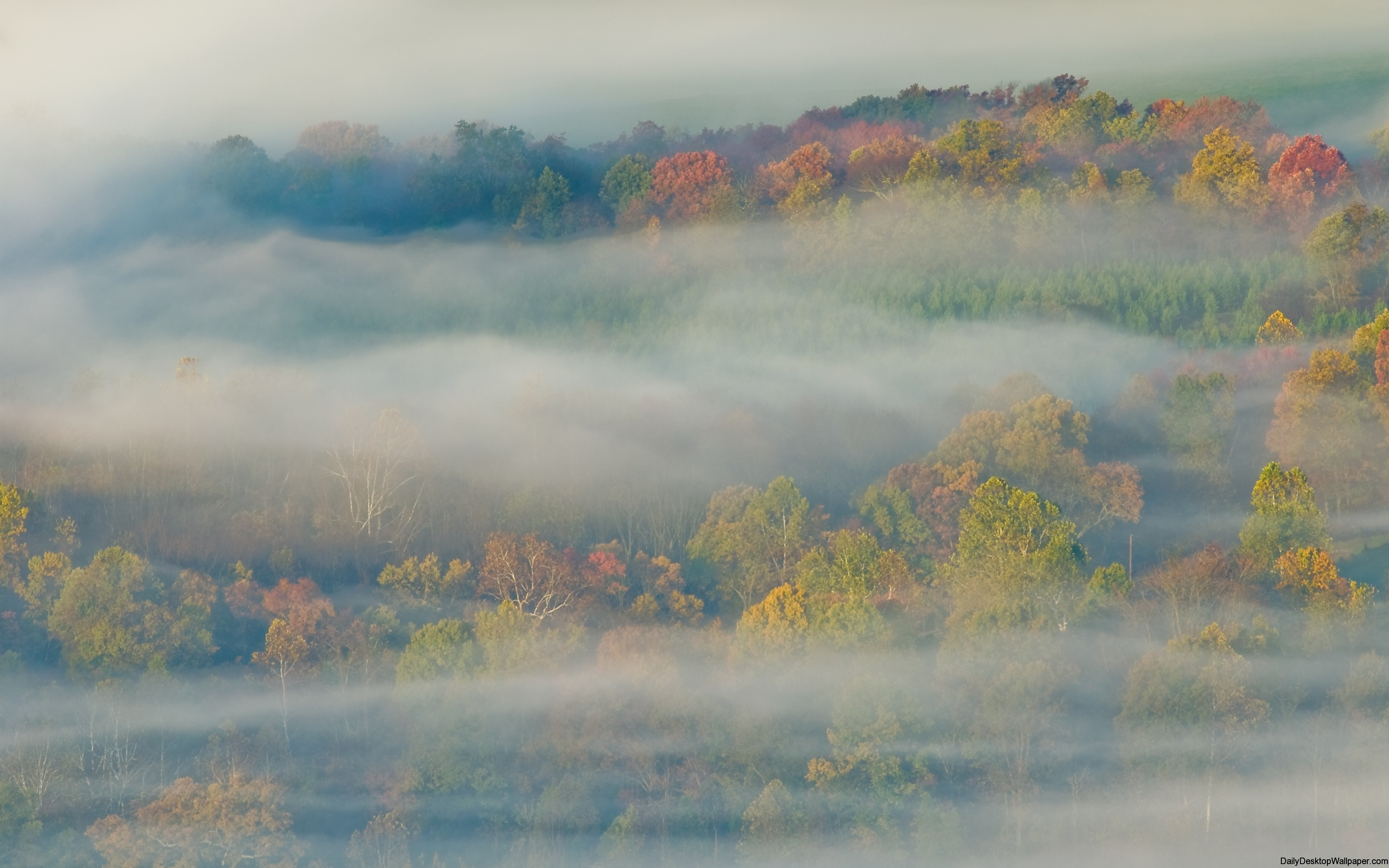 Forest in mist desktop wallpaper