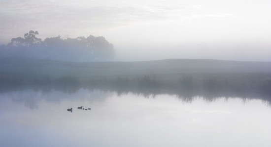 Ducks on a misty pond wallpaper
