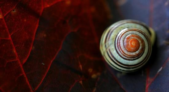 Close up snail wallpaper