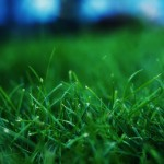 Close up grass wallpaper