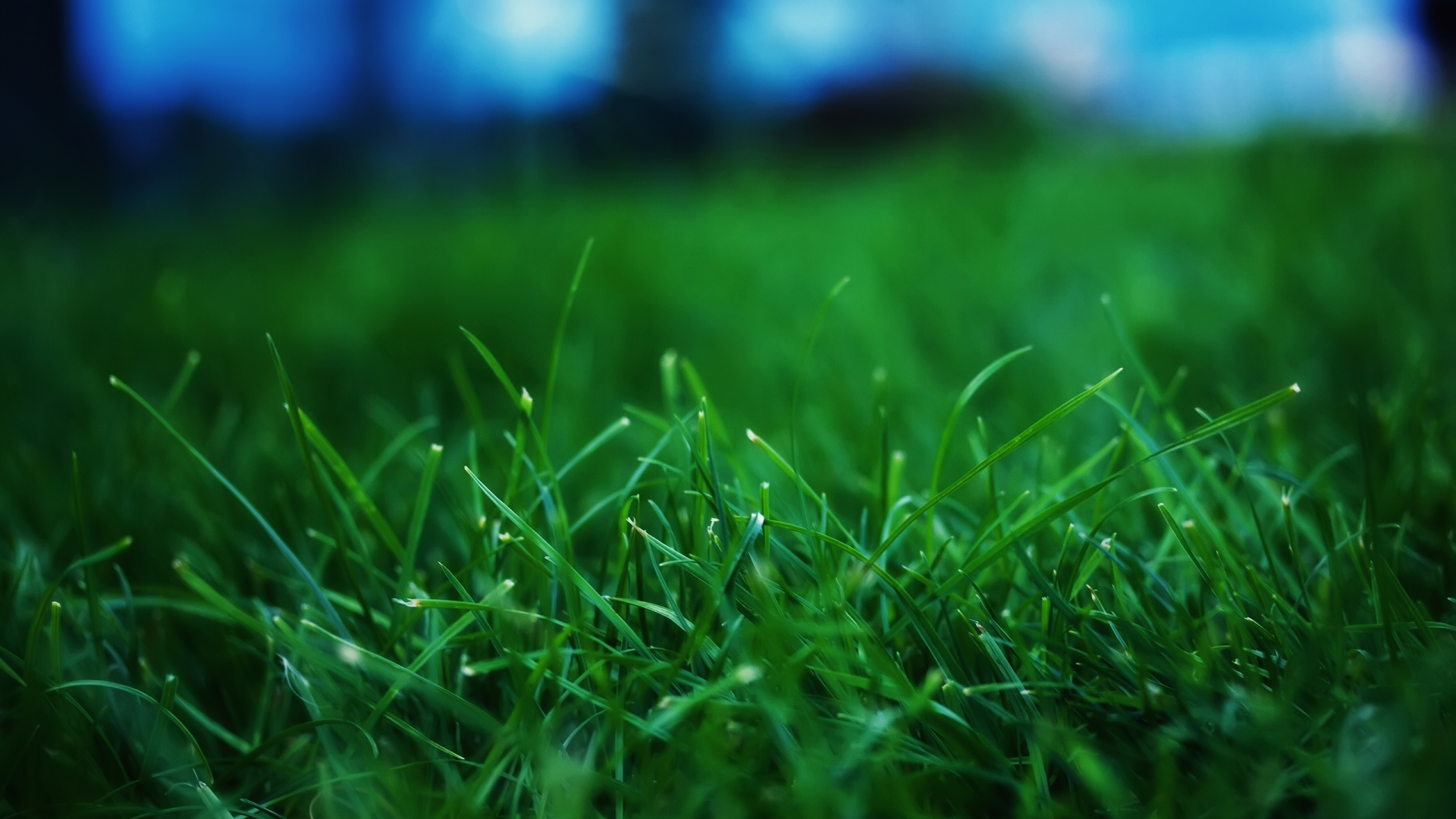 Close up grass wallpaper 964340 for Pretty grass