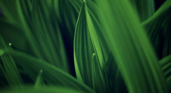 Leaves of Green