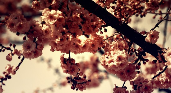 Beautiful Blossom nature wallpaper