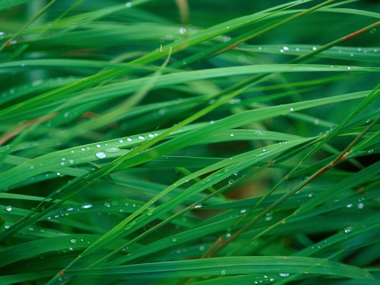 роса на траве  № 2510432 без смс