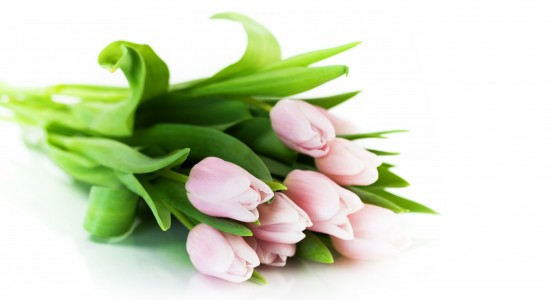 Tulips of Pink