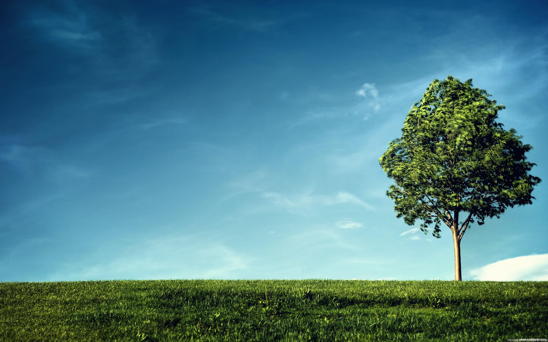 накренившееся дерево  № 989986  скачать
