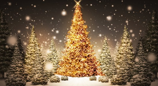 Beautiful Christmas Trees Wallpaper