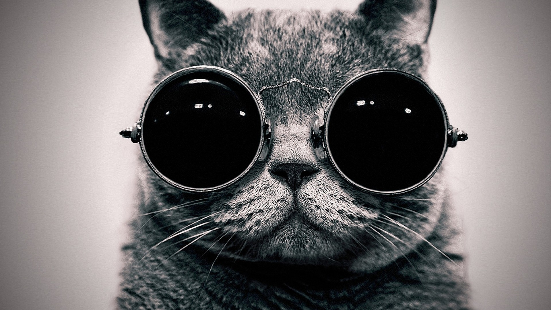 Cool cat hd wallpapers - Cool backgrounds of cats ...