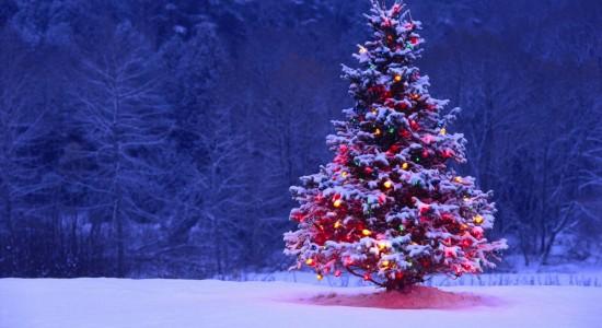 Lone Christmas Tree Wallpaper
