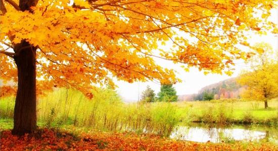 HD Autumn Scenery Wallpaper