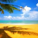 Sunny Palm Tree Beach