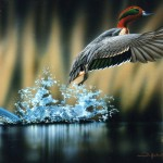 Wildlife Wallpaper