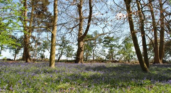 A Bay of Purple Flowers
