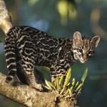 Cute Little Tiger like Cat