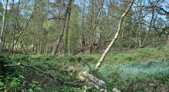 Fallen Trees Wallpaper
