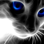 Abstract Special Effect Cat
