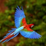 Colourful Flying Bird