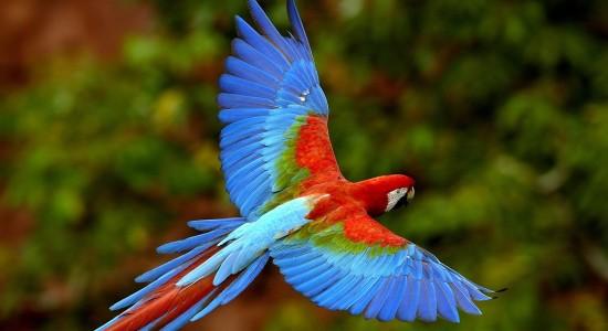 Colourful Flying Bird