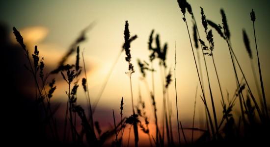 Grass-silhouette-wallpaper
