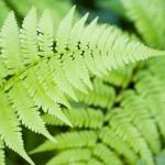 High Resolution Leaf Wallpaper