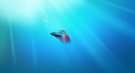 Lonely-fish-Windows-7-wallpaper
