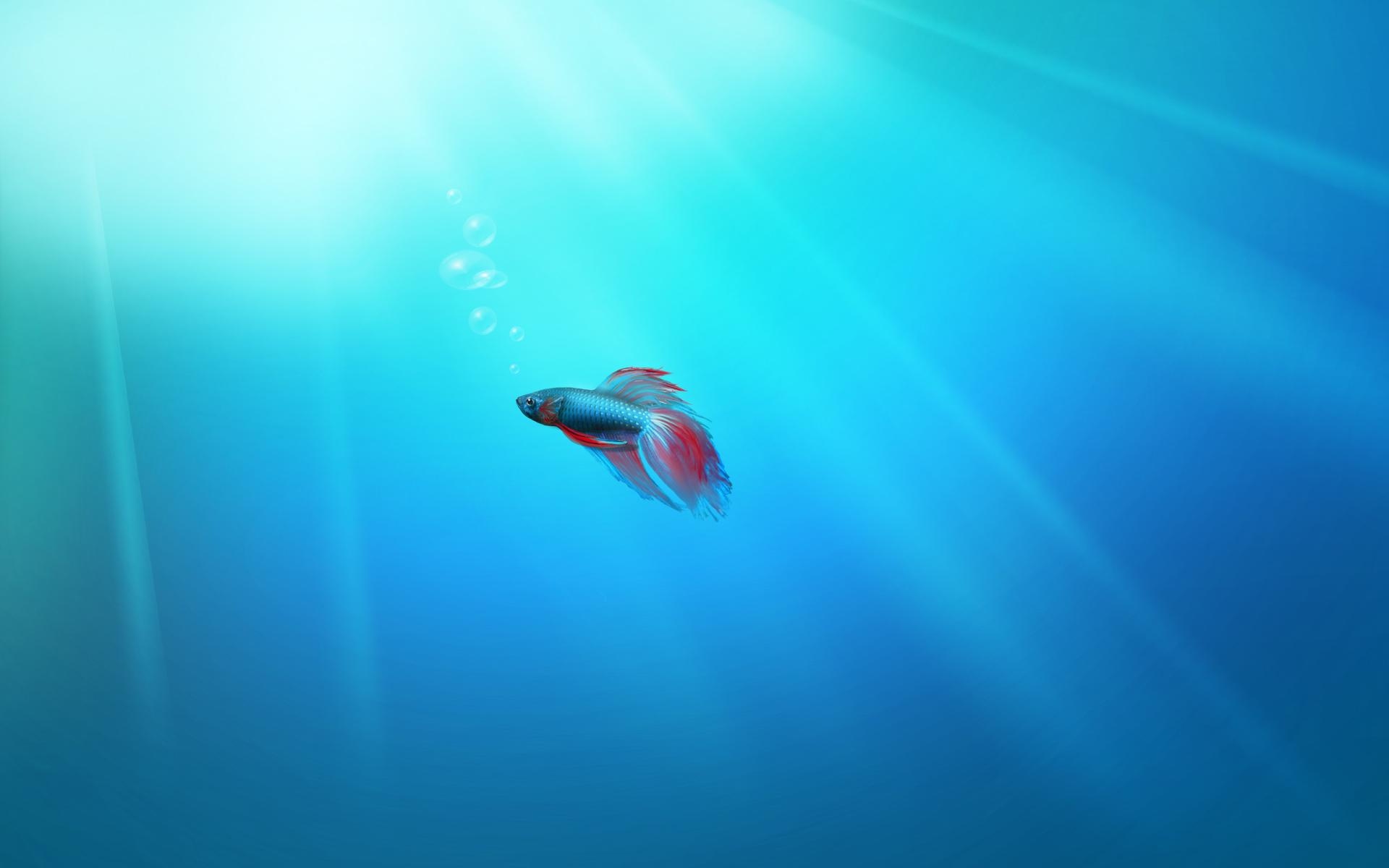 Lonely fish Windows 7 wallpaper