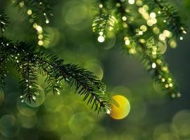 Pine Needle Dew