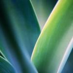 Windows 7 exotic plant wallpaper