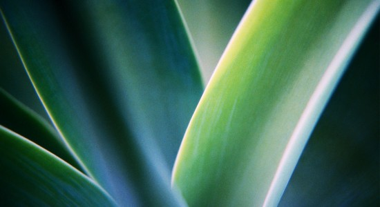 Windows-7-exotic-plant-wallpaper