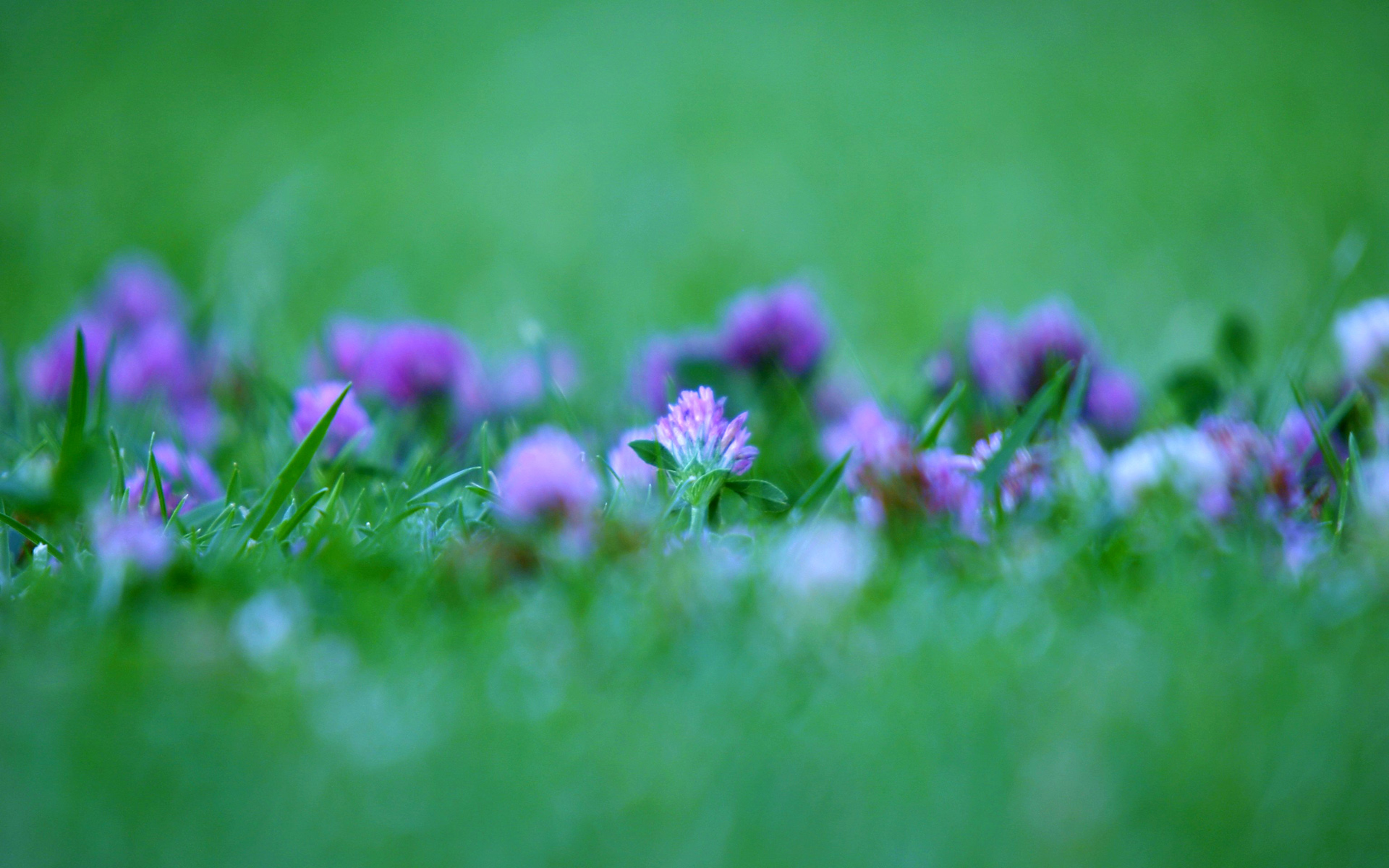 Windows 7 purple flower wallpaper