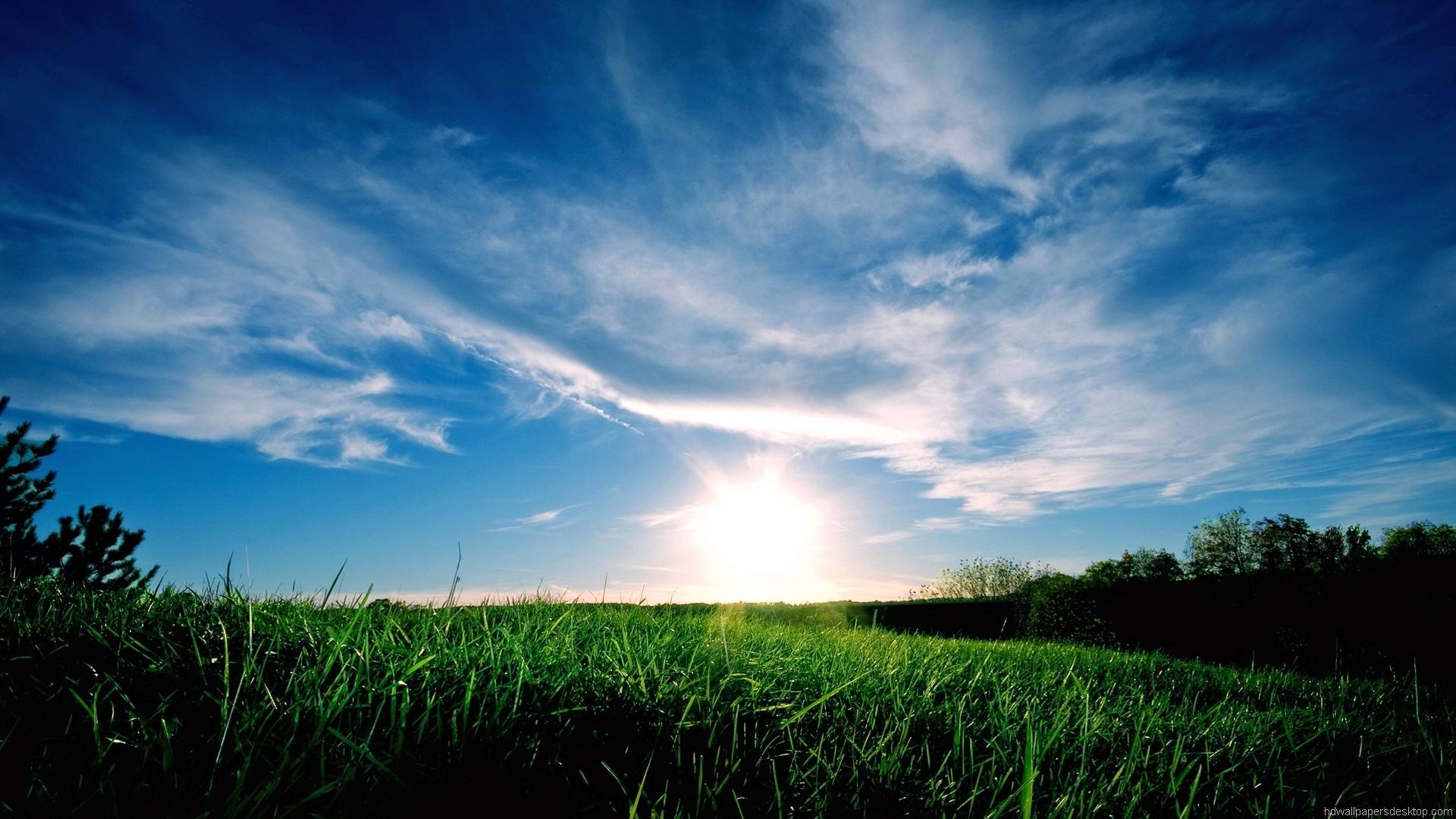 Beautiful Grassy Scene