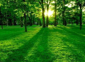 Gorgeous Green Grass