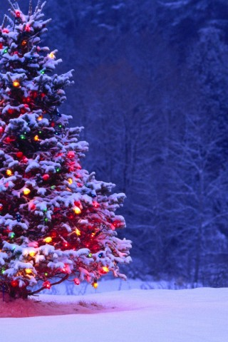 Light Covered Snowy Christmas Tree Hd Wallpapers