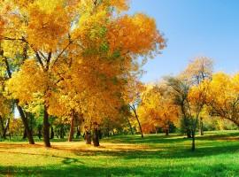 Glorious Autumn Sunshine