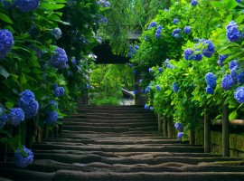 Stairway to a Garden of Nature