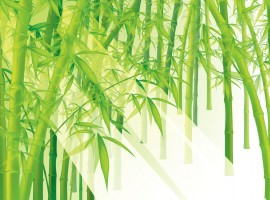 High resolution bamboo wallpaper