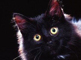 Surprised cat HD wallpaper