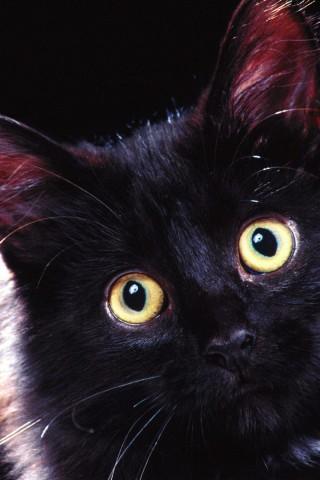 Surprised Cat Hd Wallpaper Hd Wallpapers