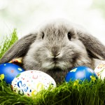 Easter bunny wallpaper