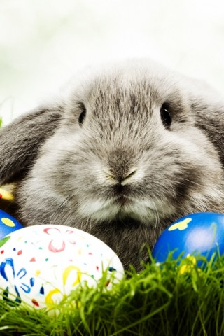 Easter Bunny Wallpaper Hd Wallpapers