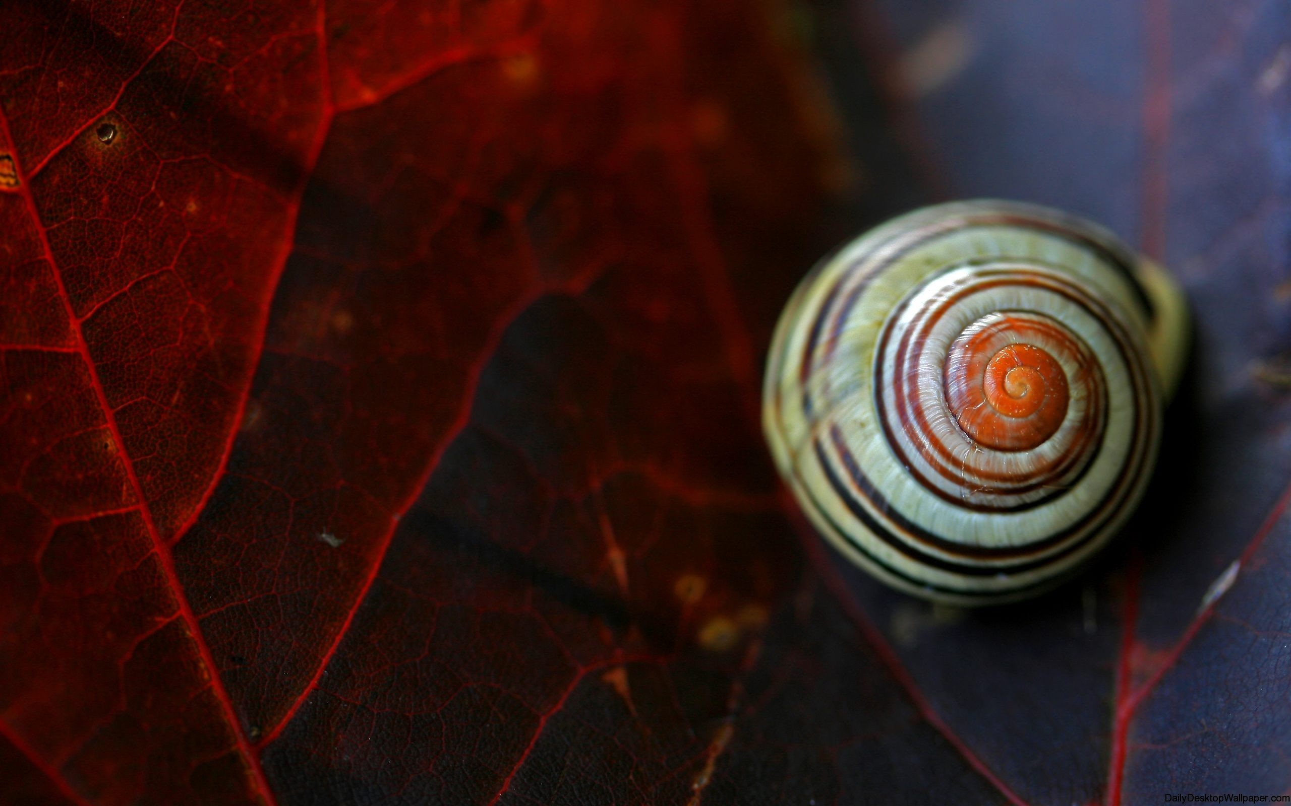 High definition snail wallpaper