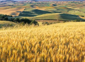 Flowing fields wallpaper