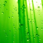 Green Raindrop Wallpaper