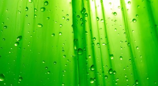 Green Raindrop Wallpaper