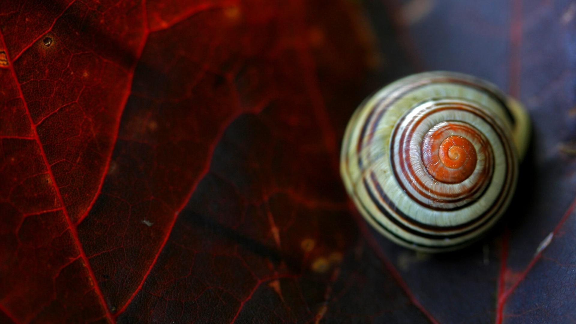 Close Up Snail Wallpaper Hd Wallpapers